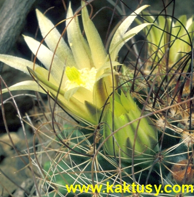 Kaktusy eshop